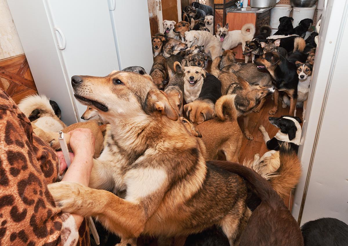 Картинки по запросу притулки собак